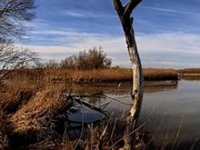 Gewässerstrukturkartierung - Uferbereich Salzachmündung